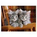 Alternate Thumbnail Image #1 of Gray Kittens - 500 Piece Puzzle - High Quality Collection