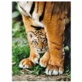 Alternate Thumbnail Image #1 of Bengal Tiger Cub - 500 Piece Puzzle - High Quality Collection