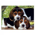 Alternate Thumbnail Image #1 of Gray Kittens & Beagle Puppies - Two 500 Piece High Quality Collection Puzzles