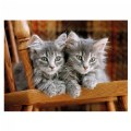 Alternate Thumbnail Image #2 of Gray Kittens & Beagle Puppies - Two 500 Piece High Quality Collection Puzzles