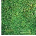 Alt Thumbnail #2 of STEM Play Mat - Grass