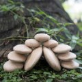 Alternate Thumbnail Image #5 of Wood Stackers: River Stones - Set of 20