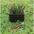 Main Image of Twig Pencils - Set of 12