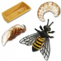 Alternate Thumbnail Image #2 of The Beeman and the Honeybee Set - Paperback Book & Life Cycle Set