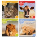 Bilingual - All About Animals Boardbook