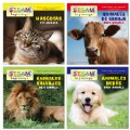 All About Animals Board Books - Bilingual Book Set
