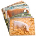Main Image of Farm Animal Posters (Set of 10)