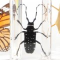 Alt Thumbnail #1 of Insect Specimens - Set of 4