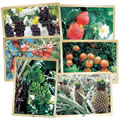 Fresh Fruits Puzzles - Set of 6 Puzzles - Promote Healthy Living and Healthy Eating