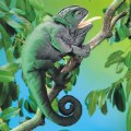 Alternate Thumbnail Image #2 of Chameleon Hand Puppet