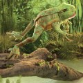 Alternate Image #2 of Jumping Frog Hand Puppet