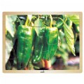 Alternate Thumbnail Image #3 of Fresh Vegetables Wooden Puzzles - Set of 6