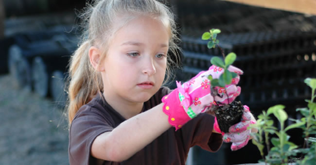 Adding Rigor to Gardening Projects