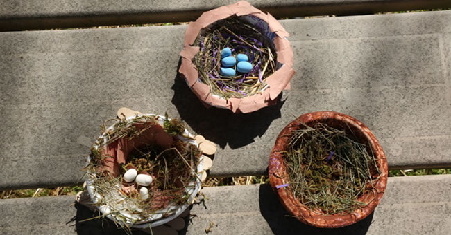 DIY Bird Nests