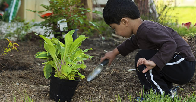 Incorporating Gardening in Lesson Plans – Gardening Lesson Plans